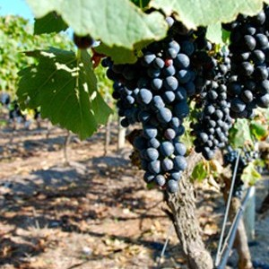 By Farr and Farr Rising Wines